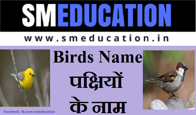 birds name in hindi and english